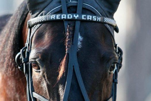 Prix d'Amérique Marionnaud 2012 : sacré Ready Cash !