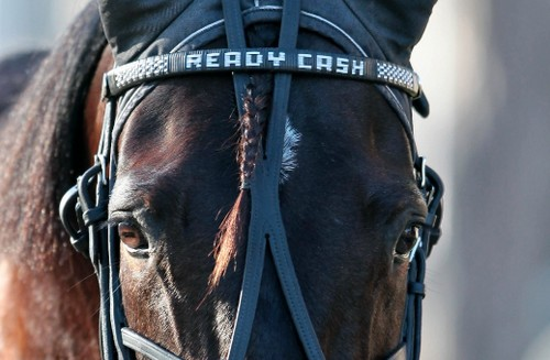 Ready Cash, le cheval toute distance
