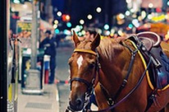 #8 Inspirations de la semaine : Horse in the City