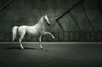 [Photography] Les chevaux bétons d'Andrey Vasilyev