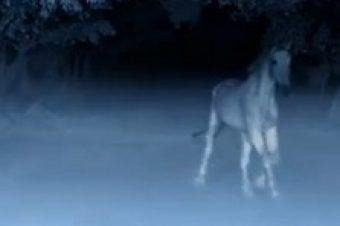 [Advertising] Mercedes-Benz fait son cinéma avec «Dark Horse»