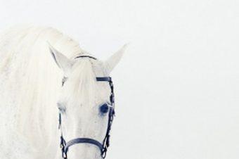 Le bling-bling blanc de RAINA+WILSON