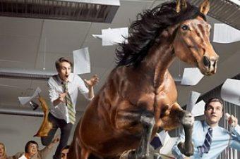 Les chevaux de Sven Prim sèment le chaos