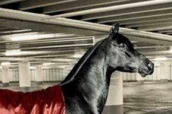 Ferrari : sortez couvert
