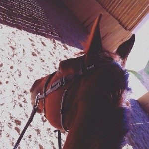 Riding time   horse horseriding equitation cheval cavallo caballohellip