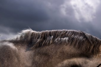 #5 [Photography] : Adrian Ray choisit le cheval ombragé