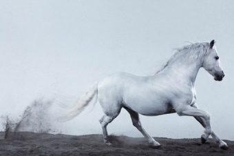 [Book] L'apologie photographique de Jill Greenberg :  Horses