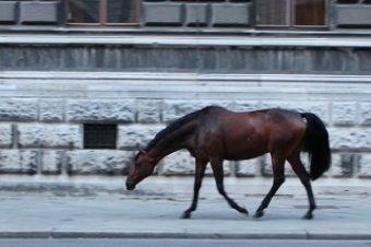 [Global Champions Tour] Vienne : le cheval dans la ville