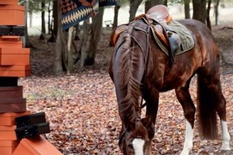 [Equestrian Media] The Horse Rider's Journal passe l'hiver en forêt