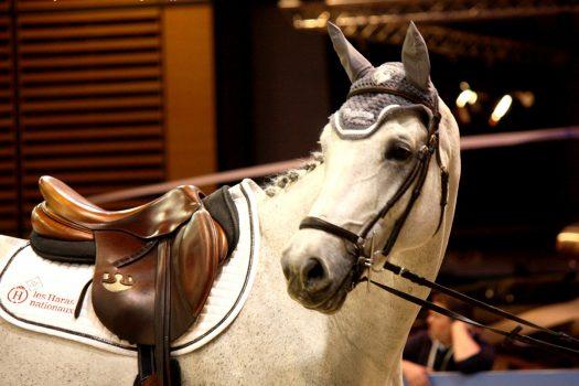 Interviews editorials pegasebuzz le cheval for Salon du master