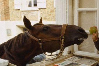 [Hippisme] Ourasi, la France perd son dernier roi