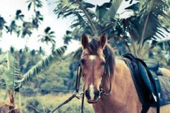 [Equestrian Wedding] (B)ride To Be !