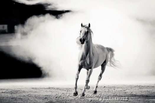 [EN IMAGES] Gala Equisud 2013 : L'Alchimie Equestre de Mario Luraschi