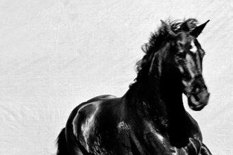 [Photography] Gary Heery : Horses