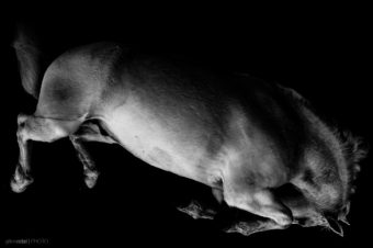 [Photography] Gilles Vidal : Horse Body