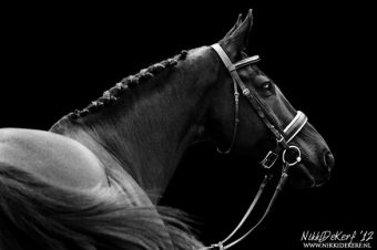 [Photography] Nikki de Kerf : Equine black and white