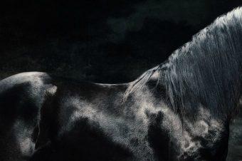 [Photography] Les chevaux de Tejal Patni