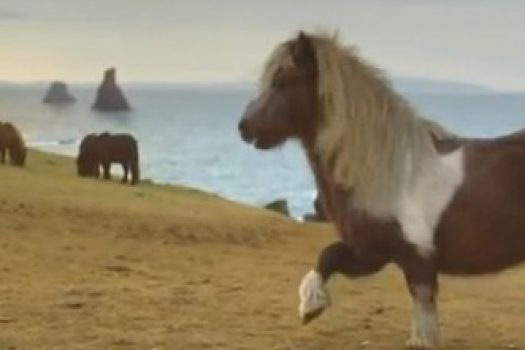 [Advertising] Three and Wieden+Kennedy make THE PONY