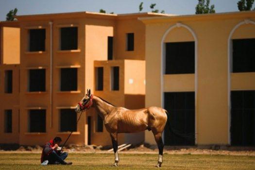[Photojournalism] Beijing Equestrian Sport Festival, première