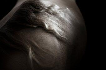 [Photography] Lou Bailly-Kermène : EQUUS