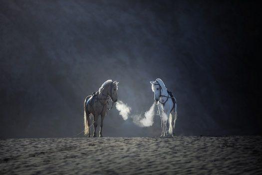 [Photography] L'Indonésie animale vue par Achmad Munasit