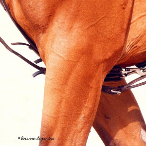 Roxanne Legendre  ParisEiffelJumping 2015    Longineshellip