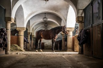 [Dream Barns] Bagienec Stables – Poland