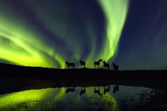[Photography] Le cheval Islandais de Ragnar Sigurdsson