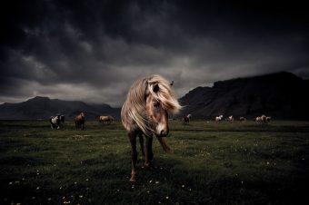 [Photography] Le cheval Islandais vu par Óskar Páll Elfarsson