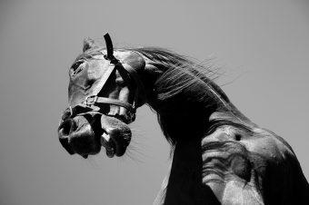 [Equestrian Photography] Richard Baxter