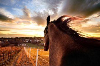 [Equestrian Photography] Dan : le jour et la lumière
