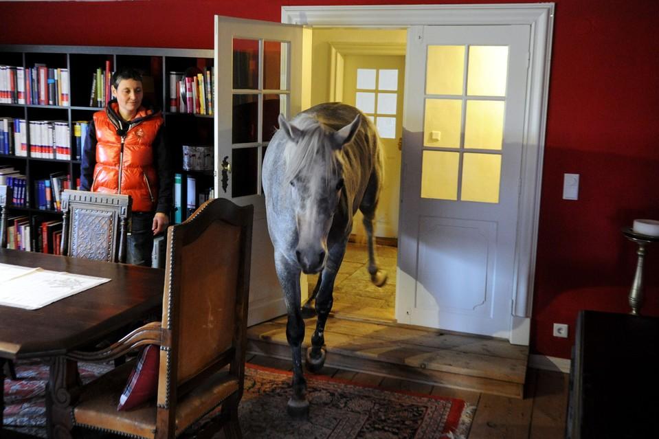 http://pegasebuzz.com/leblog/wp-content/uploads/2014/02/nasar-horse-lives-inside-a-house-03.jpg