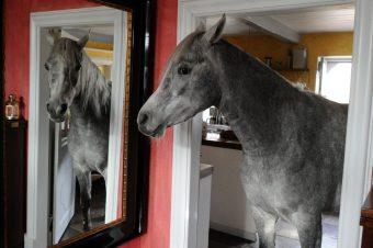 [Lifestyle] Nasar, le cheval à la maison comme à l'écurie