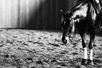 [Equestrian Photography] Silvia Mozzon : quarter horse