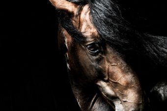 [Equestrian photography] Tuukka Koski : Lusitano