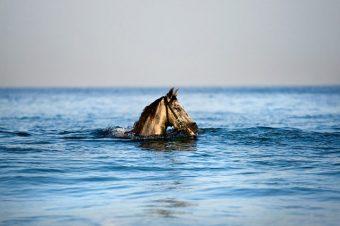 [Equestrian photography] Shlomi Nissim