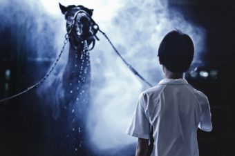 [Equestrian Photography] Aihciy Hsu : le rêve bleu