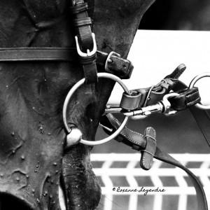 Roxanne Legendre  Hippodrome de DeauvilleClairefontaine 2014  hellip