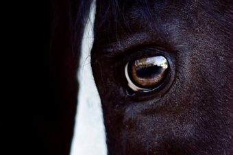 [Equine Photography] Angeliki Hristoff : The horse in the box