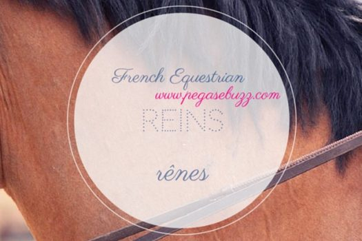 [Instagram] French Equestrian : reins