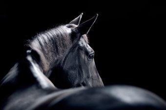 [Equestrian Photography] Jonatan Fernström : Horses