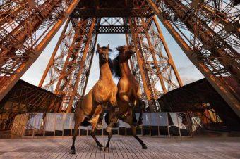 [Longines Paris Eiffel Jumping] L'affiche 2015 !