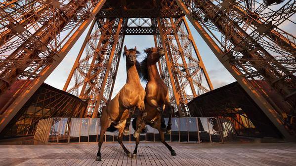 www.pegasebuzz.com | Longines Paris Eiffel Jumping 2015