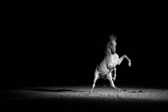 [Equestrian Photography] Melis Yalvac : Freedom in Black & White