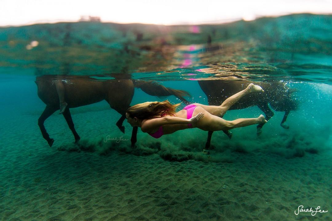 www.pegasebuzz.com | Equestrian photography : Sarah Lee