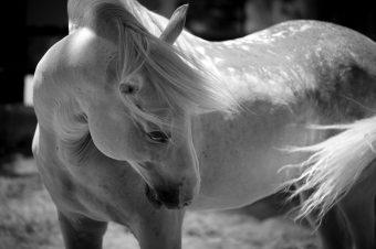 [Photography] Jessica Arneback : Andalousian