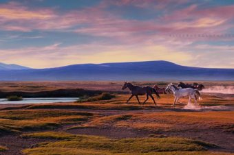[Photography] Ali Saracoglu : la vraie nature des chevaux