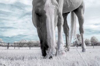 [Equestrian Photography] David Baterip : Infrared Horse