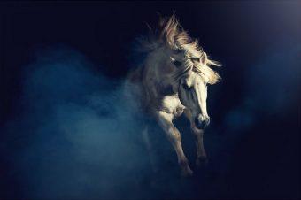 [Equestrian Photography] Laila Kazakevica Schmitt : Chevaux