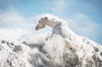 [Equestrian photography] Pola Gałczyńska : Pure and Simple